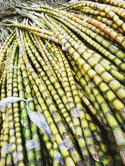 Sugarcane Raw Sugar Large Group Of Objects No People Palms Plant Food Source Food Culture Investing In Quality Of Life