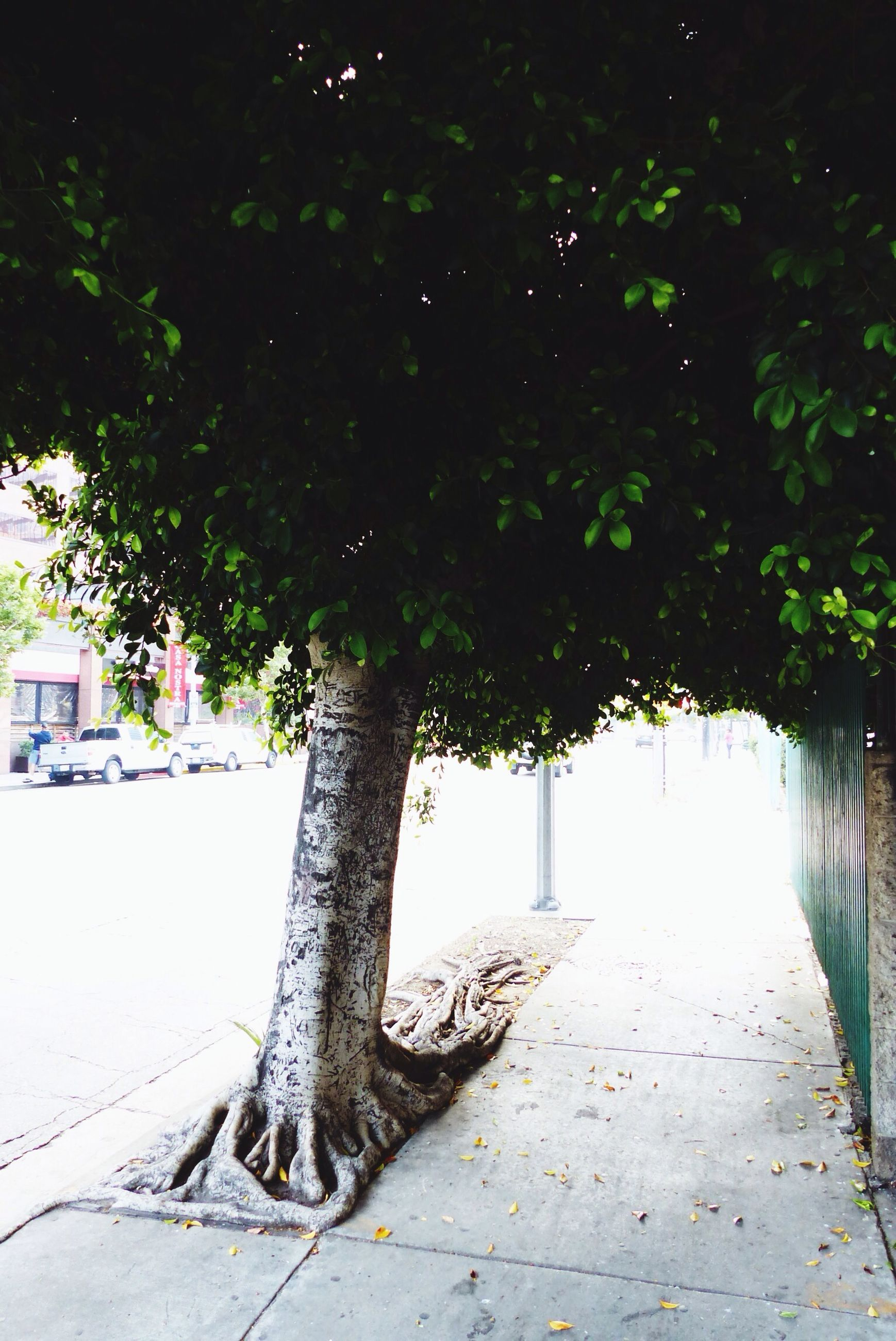 leaf, tree, footpath, plant, growth, sidewalk, cobblestone, shadow, outdoors, sunlight, nature, bench, street, day, no people, built structure, the way forward, pavement, wall - building feature, branch