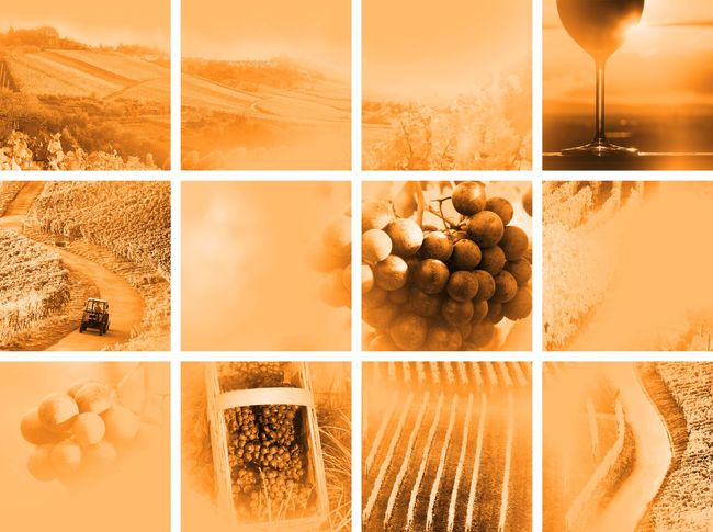 wine collage soft style Autumn Backgrounds Collage Colorful Drinks EyeEm Gallery Field Grapes Landscape Landscapes With WhiteWall Montage Montage Photography Nature No People Outdoor Pictures Photo Montage Riesling Sepia Summer Vineyard Vintage Wine Wine Farm Wineglass Winery