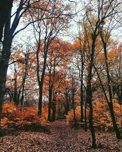 Autumn Change Nature Beauty In Nature Tree Leaf Tranquility Tranquil Scene Forest Scenics Outdoors No People Landscape Tree Trunk Day Branch Enjoying The View Enjoying Life Colors Real Photography The Week On EyeEm Lifestyles Spirituality Walking Around Berlin