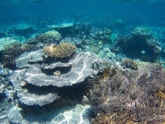Scenics Sea Anemone Reef Underwater Sea Sea Life UnderSea Coral Water Beauty In Nature Nature Multi Colored No People Day ~ Greatbarrierreef Cairns, North Queensland, Australia