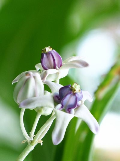 Nature Beauty In Nature Close-up Freshness Flower Head Close Up Plant Trees Nature Crown Flower Purple Flower Flowers
