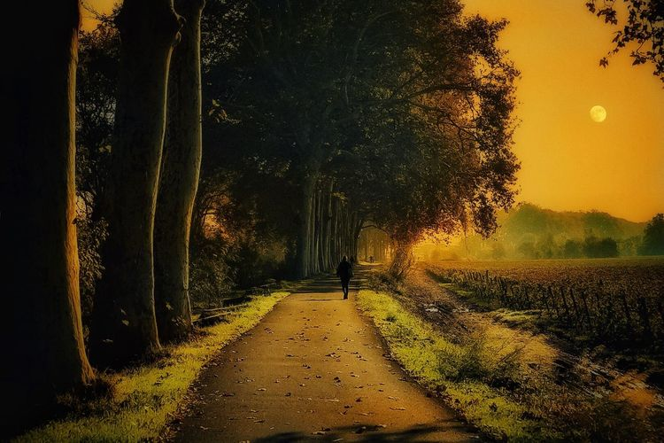 Alone Autumn
