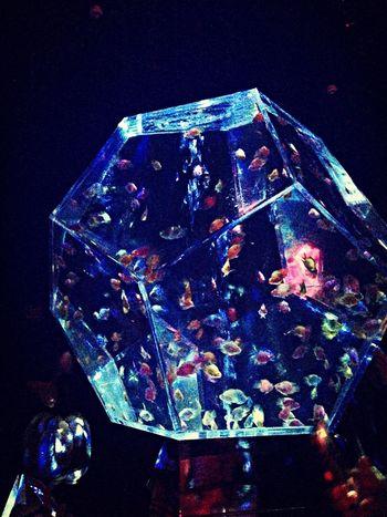 アートアクアリウムの続きです(*^^*) Art Aquarium Water Hi!