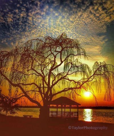 Sunset.. Nikon Sunset Taylorphotography
