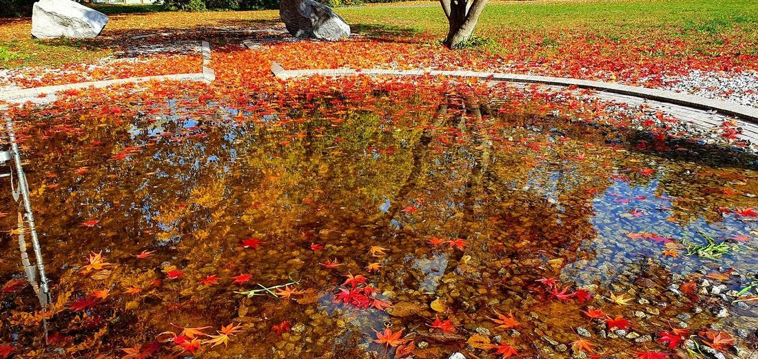 High angle view of autumn leaves in park