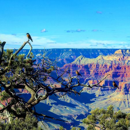 Grand Canyon Nature Wildlife Birds Sky Beauty In Nature Outdoors Animals In The Wild Scenics Bird One Animal Animal Themes No People Day Tree Perching Amazing Majestic Breathtaking View Hikingphotography Hiker Tranquil Scene Hiking Adventures Tranquility Gorgeous