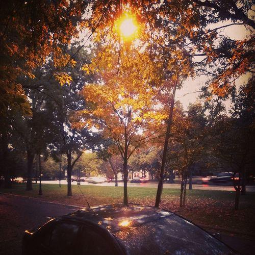 Autumnleaves Logansquare Lightplay FallPalette