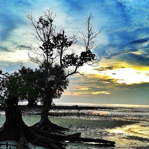 Trees Karimun Keprifoto Repost INDONESIA Sunset Sukasuka
