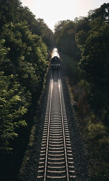 High angle view of railroad tracks by trees