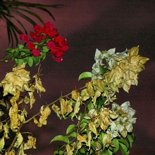 Atardecer Flores Cielo De Colores