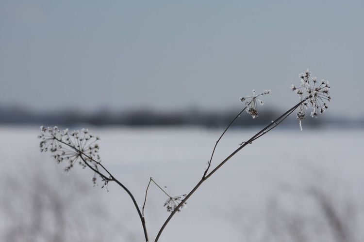 Peaceful Peace And Quiet Russianwinter Snowflake Ice Frozen Nature Frozen Landscape  Frozen Flowers Nature Winter Water Beauty In Nature Outdoors Cold Temperature Focus On Foreground Tranquility Day No People Snow Frozen Close-up Freshness
