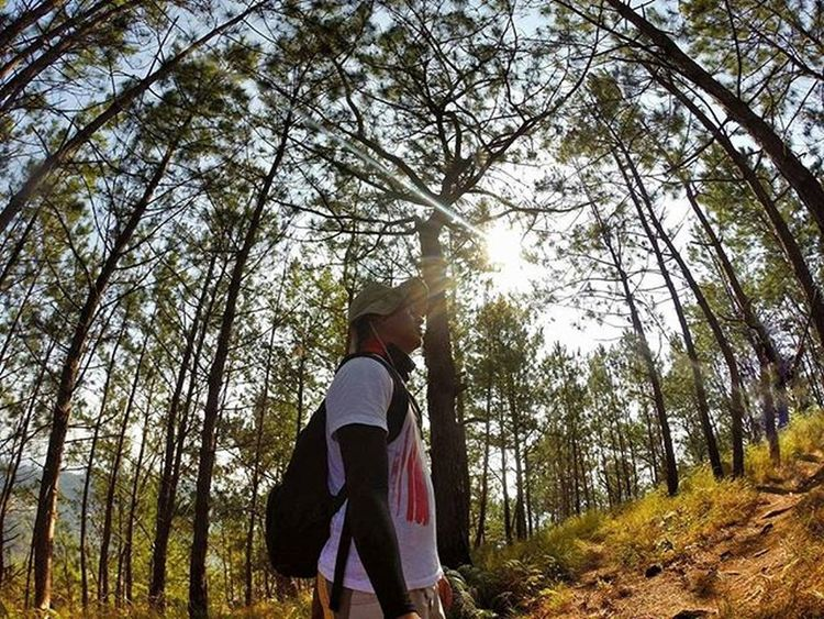 I never seen it so fine.. Pine as a tree Camboytraveler Pinoywanderer Doyoutravel Theglobewanderer Discoverearth Travel_pic Amazing_pictures Amazing_pictures Goprouniverse Goworldwide Goprophotography_ Goproph  Gopro Gopro_epic
