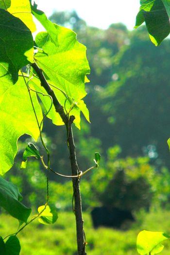 GreenGreenGreen Nature Costarica