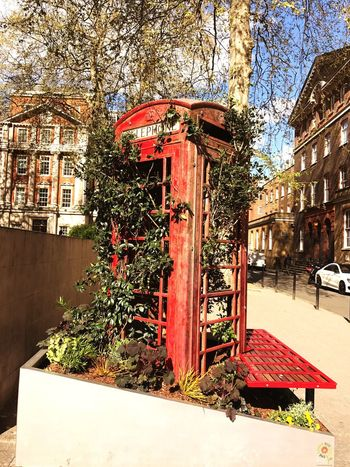 Plant Outdoors Growth Nature Telephone Booth Telephone Box Hospital Kingscollege Guyshospital Seating Bench Art