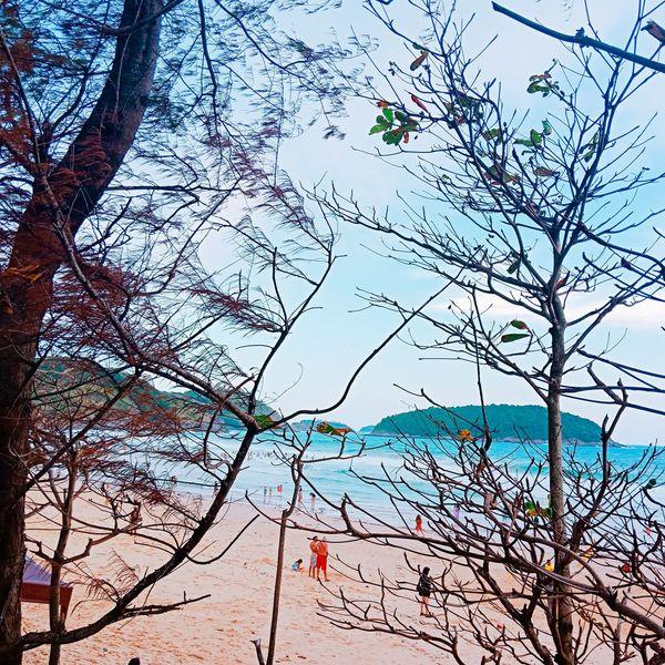 Nai Harn Nai Harn Beach  Thailand🇹🇭 Tree Bird Branch Bare Tree Backgrounds Sky