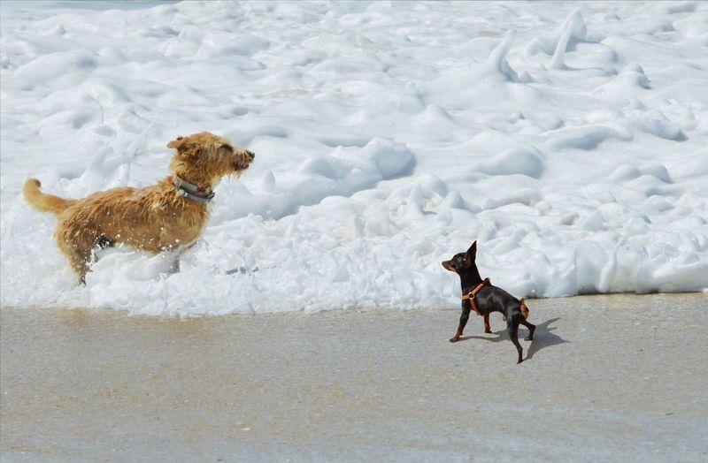 Pets Domestic Canine Domestic Animals Dog Mammal Animal Themes