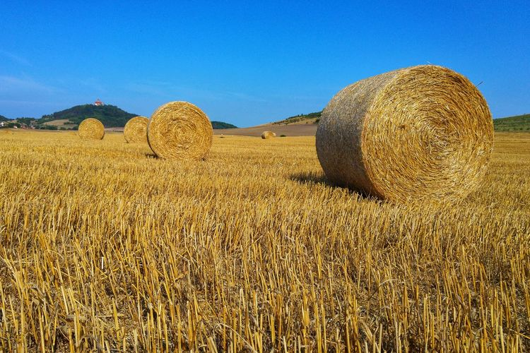 Thuringia Clear Sky Rural Scene Sky Landscape Hay Bale Bale  Haystack Agriculture Straw Rolled Up Agricultural Field Farm Cultivated Land Farmland Harvesting