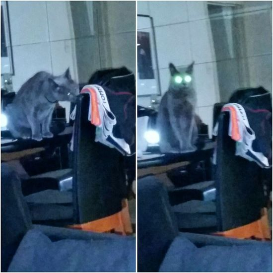 """Sprung ! Dirty kitty sniffing our new underwear... """"You.. Saw.. Nothing... """" Lasercat Catsofinstagram Dirtykitty"""