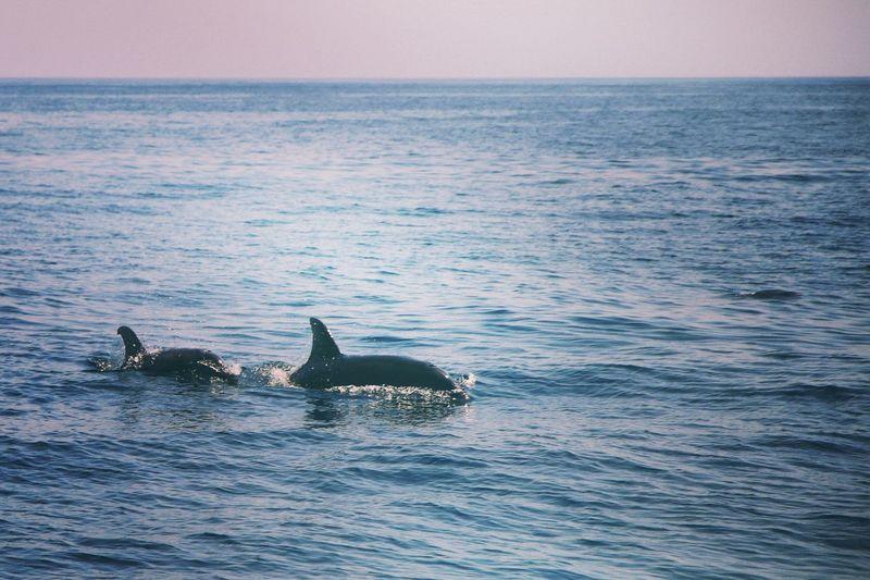 seafaris.dolphins EyeEm Selects Humpback Whale Whale Sea Life Water Swimming UnderSea Sea Sunset Underwater Beach Animal Fin Dolphin Aquatic Mammal Eco Tourism Wilderness Calm Horizon Over Water Aquatic Saltwater Fish Summer Exploratorium EyeEmNewHere Visual Creativity