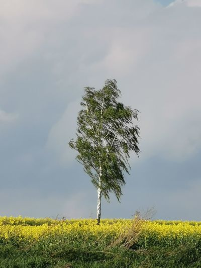 Tree Leaf Agriculture Rural Scene Branch Field Sky Close-up Grass Plant Single Tree Patchwork Landscape Treetop Cultivated Cultivated Land Agricultural Field Plantation