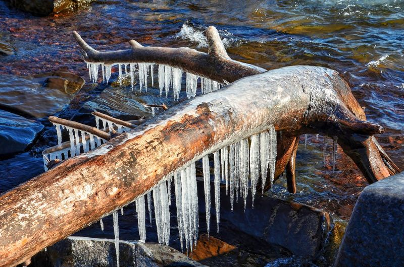 Icicles on fallen tree by lake