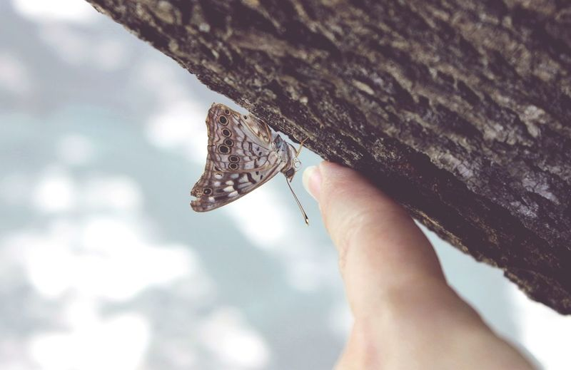 Nature Nature Photography Butterfly Countryside NaturalBeauty Trees Tree Trunk