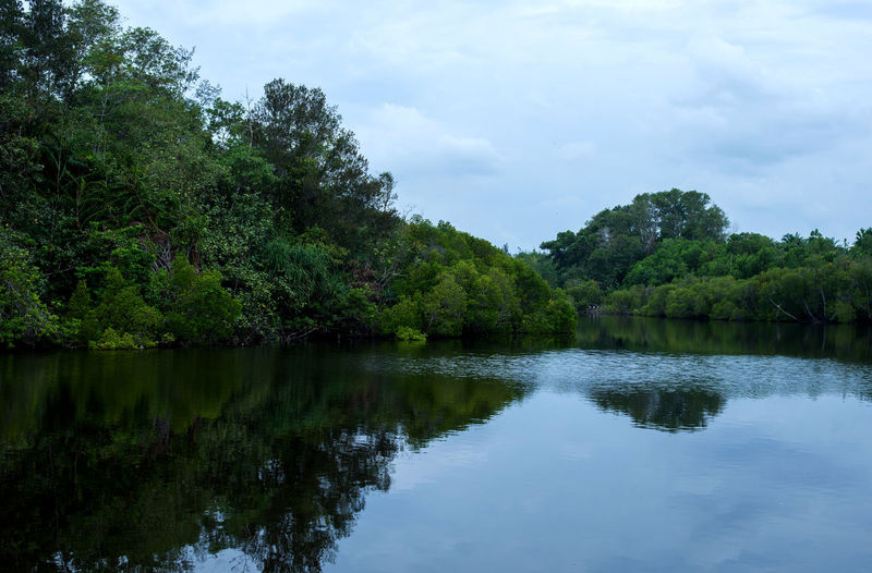 nature background _lake Water Tree Reflection Plant Sky Lake Tranquility Beauty In Nature Tranquil Scene Scenics - Nature Nature Cloud - Sky No People Growth Day Environment Non-urban Scene Green Color Outdoors