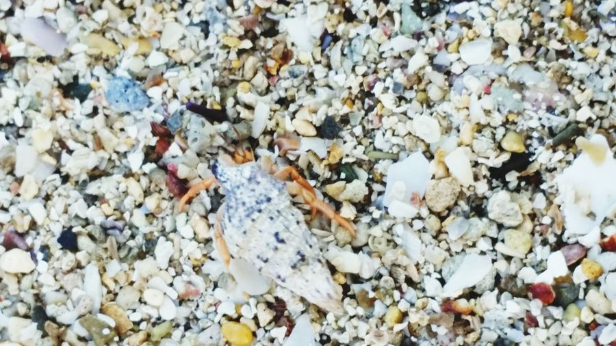 A Litlle Crab In A Sand Beauty In Nature Outdoors Day