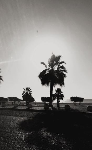 Palm trees against clear sky