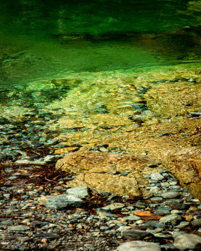Water Nature No People Beauty In Nature Underwater Day Rock Environment Sea Animal Wildlife Solid Animal Green Color Outdoors Tranquility Animal Themes Transparent Land Rock - Object Shallow Pollution Flowing Water