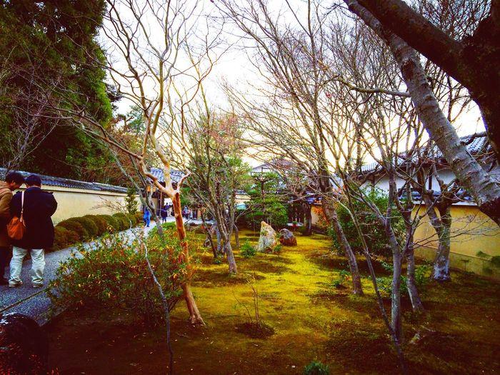 大徳寺 芳春院 特別拝観 Relaxing Kyoto 京都 寺社仏閣