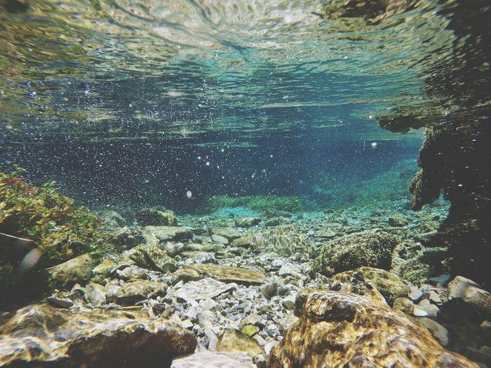 Blue Eye Syrikalter Albania Underwater UnderSea Water Nature Coral Multi Colored GoPro Hero3+
