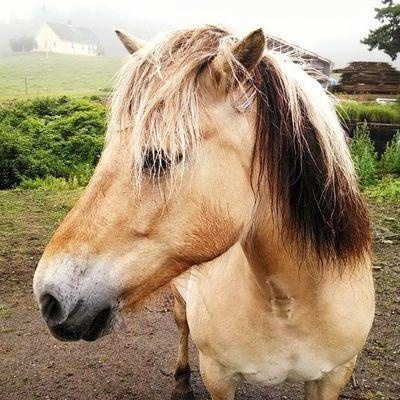 A Horse named Elsia. PrincesInlet