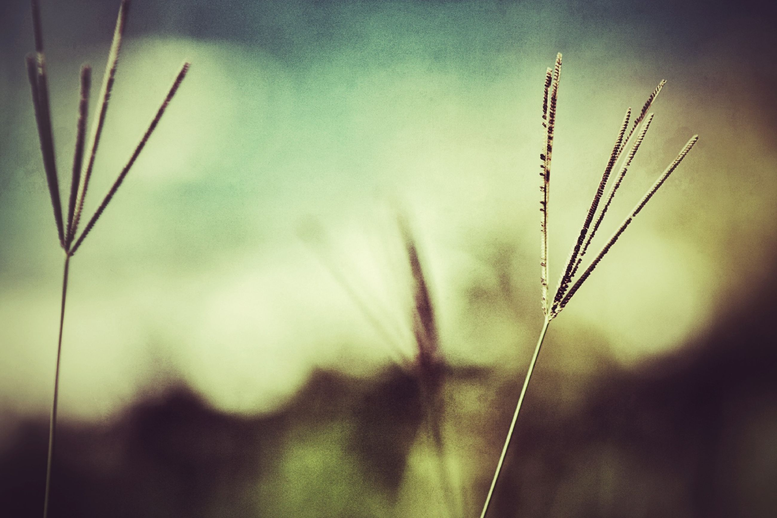 focus on foreground, plant, close-up, stem, growth, nature, selective focus, twig, fragility, grass, field, beauty in nature, day, outdoors, blade of grass, no people, tranquility, dry, freshness, flower