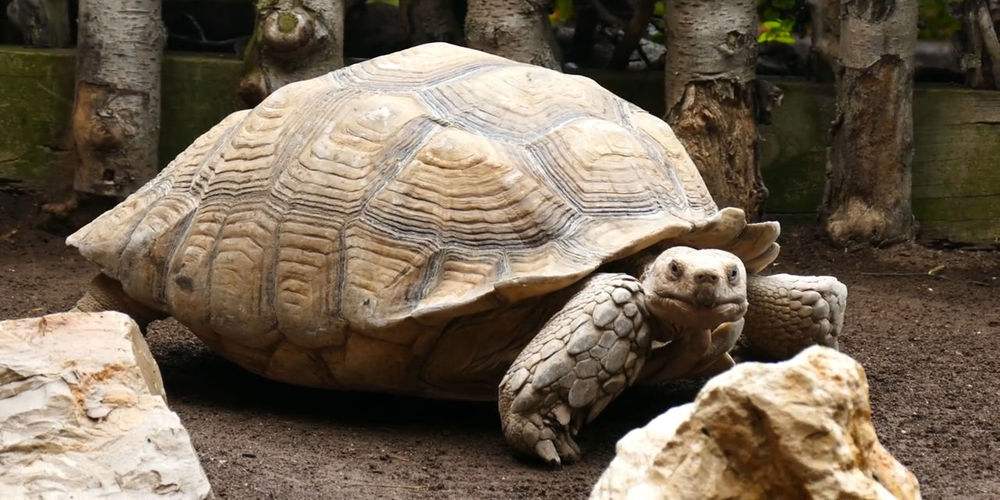 Close-up of a turtle in zoo
