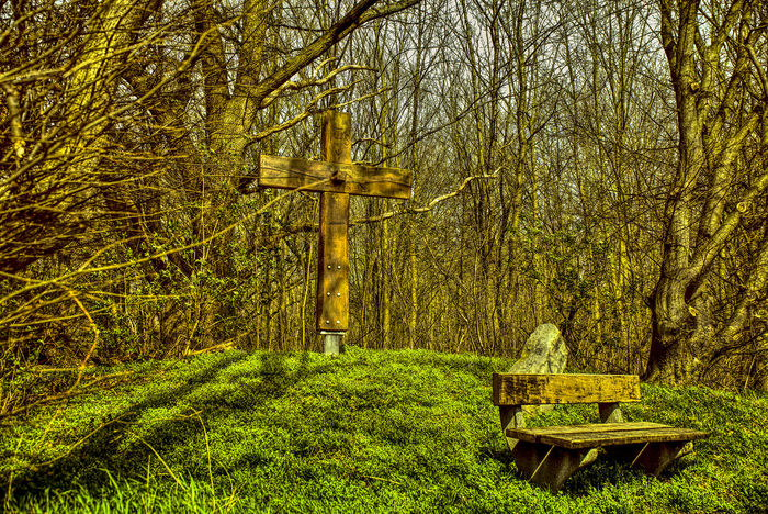 Bank Beauty In Nature Day Forest Grass Green Color Growth Hdrphotography Nature Naturephotography No People Outdoors Scenics Seat Bench Tranquil Scene Tranquility Tree Tree Wooden Crosses
