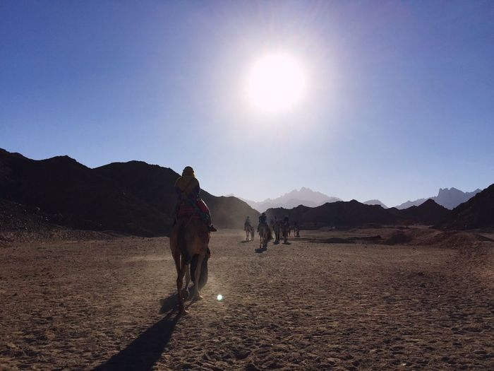 Rear View Of Horse Riding At Desert