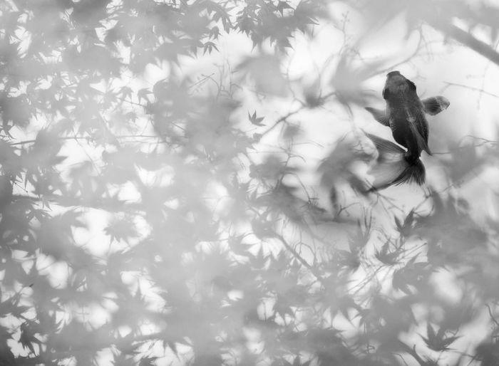 EyeEm Eyeemphotography EyeEmBestPics EyeEm Best Edits EyeEm Gallery Japan EyeEm Best Shots Blackandwhite My Favorite Photo EyeEm Best Shots - Black + White Blackandwhite Photography Golden Fish
