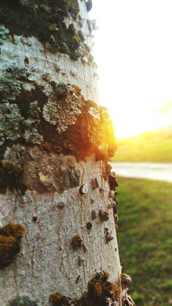 Nature Tree Outdoors Beauty In Nature No People Taking Photos Wood Growth Watching Sunsets