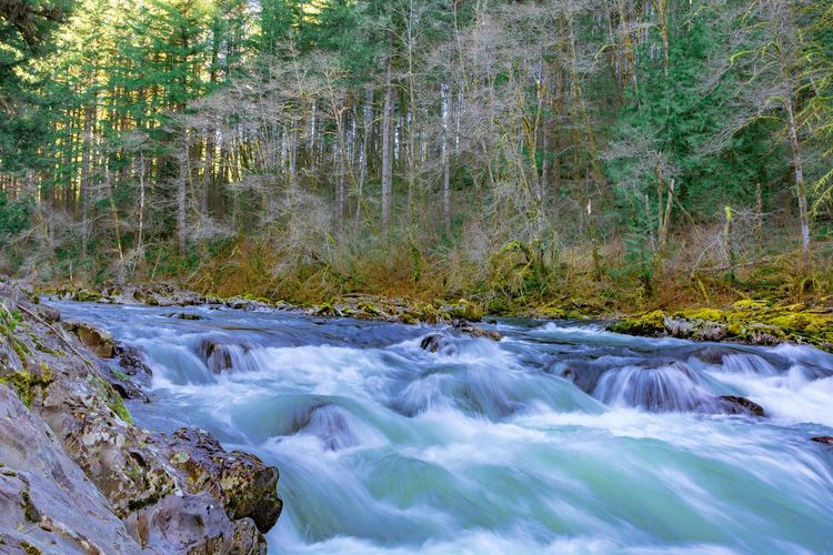 Forest Water Tree Beauty In Nature Motion Land Scenics - Nature Plant Long Exposure Flowing Water Nature Blurred Motion No People Day Rock River Solid Waterfront Growth Outdoors Flowing Stream - Flowing Water WoodLand Power In Nature Running Water