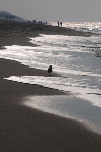 Strandspaziergang Strandspaziergang Nordseeküste Nordsee Feeling🐚🌾 Nordseeinsel Nordsee... Beach Photography Beachphotography Beach Life Flimmerndes Sonnenlicht Schäumendes Meer Wellen Und Meer Beautiful Nature Beautiful Day Stimmungsbild Stimmungsvoll Strandspaziergang Am Strand Rantum Water Land Beauty In Nature Nature Outdoors Nordseeküste Sylt, Germany Sylt Strand