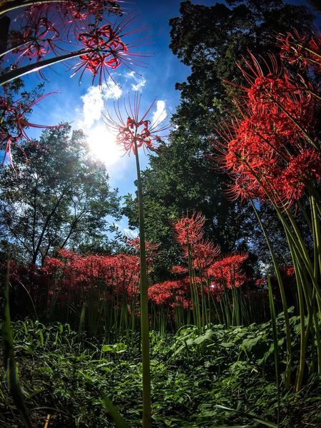 Growth Tree Nature Beauty In Nature Sun Low Angle View Flower Outdoors No People Day Sky