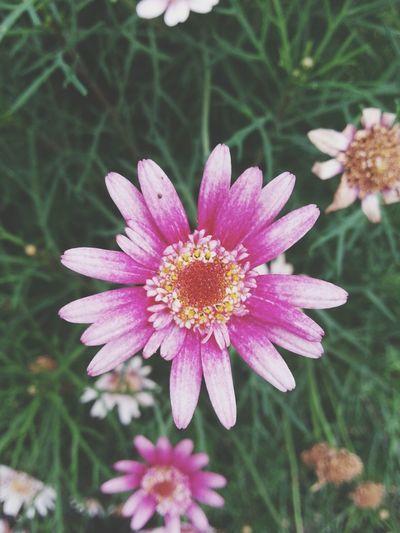 Flower Power In