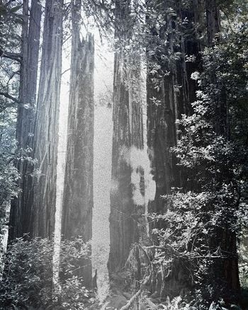 Tree Forest Tree Trunk Nature WoodLand Pinaceae Pine Tree Growth Day Outdoors No People Branch Beauty In Nature Tree Area Sky Digital Manipulation Futuristic Ghost Girl Pixelated Beauty In Nature Glitch Enhanced Break The Mold Glitch Art
