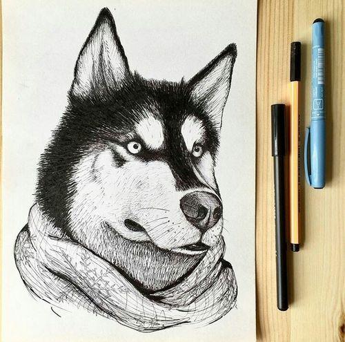 рисунок Animal пес собака хаски
