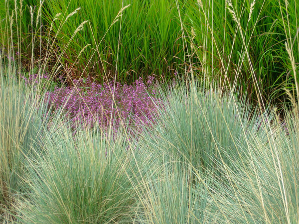 Grasses and pink groundcover Green Horizontal Nature Ornamental Grasses Pacific Northwest  Plants Carex Grasses Lush Greenery No People Oat Grass Peaceful Pink Flowers Sedge Silvery