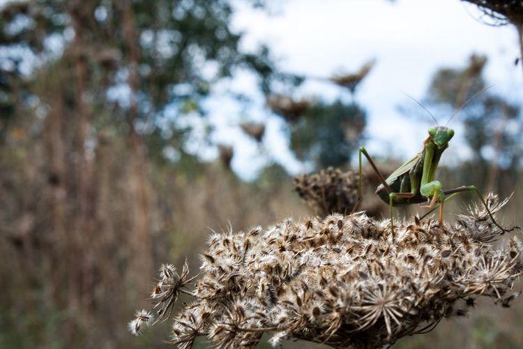 Bugs Friend