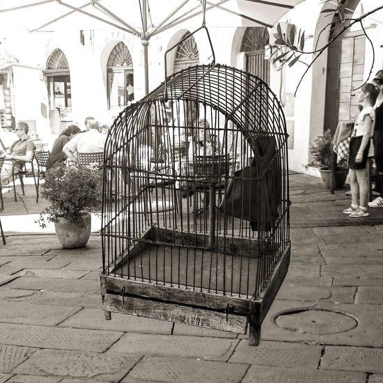 Lucca Photography Photooftheday Photographer Toscananelcuore Toscana Toscany Toskana Toscanartistica Toscana_amoremio