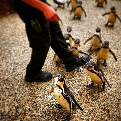 The answer to every problem involves a penguin Little_munchkin_patch_Childcare